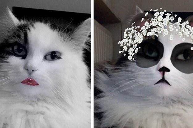 22 pets who have mastered snapchat