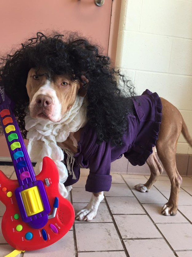 These Shelter Dogs Dressed Up As Prince To Help Find