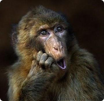 Sentirte muy identificada con este mono.