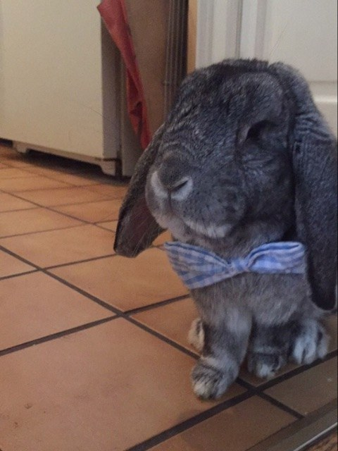 OH, HOLD ON. NOW WE HAVE A BUNNY IN A BOW TIE.