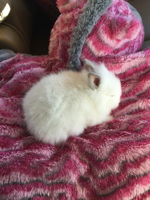 And if that's not fluffy enough for you, THEN CHECK OUT THIS BABY BUN.