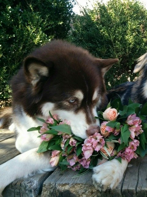 So don't forget to stop to smell the roses.
