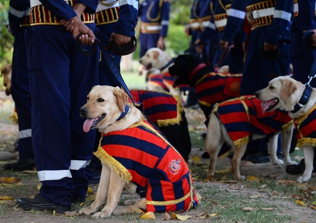30 new dogs were inducted into the New Delhi Police Force at a ceremony at the India Gate lawns on April 4.