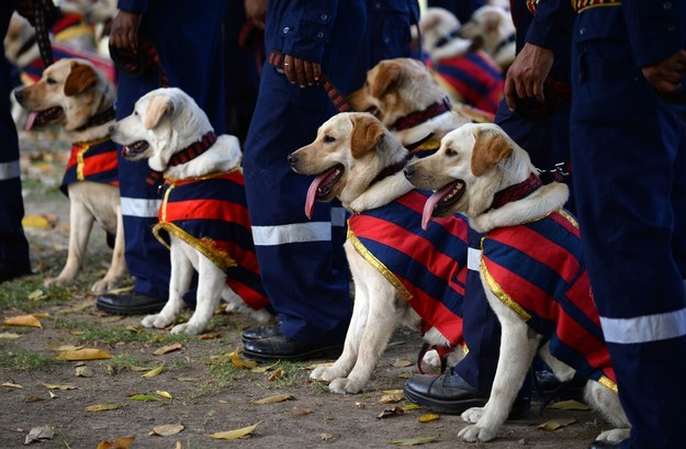 Our nation's capital is definitely in good paws. Godspeed, doggies. Godspeed.