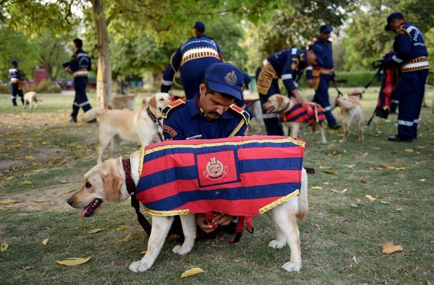 All the new recruits are specially trained labrador retrievers.