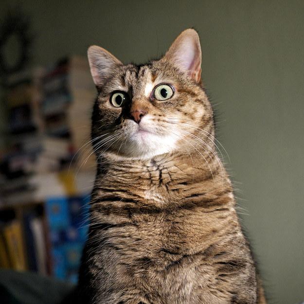 Quando você dá uma olhada na sua conta no fim do mês.