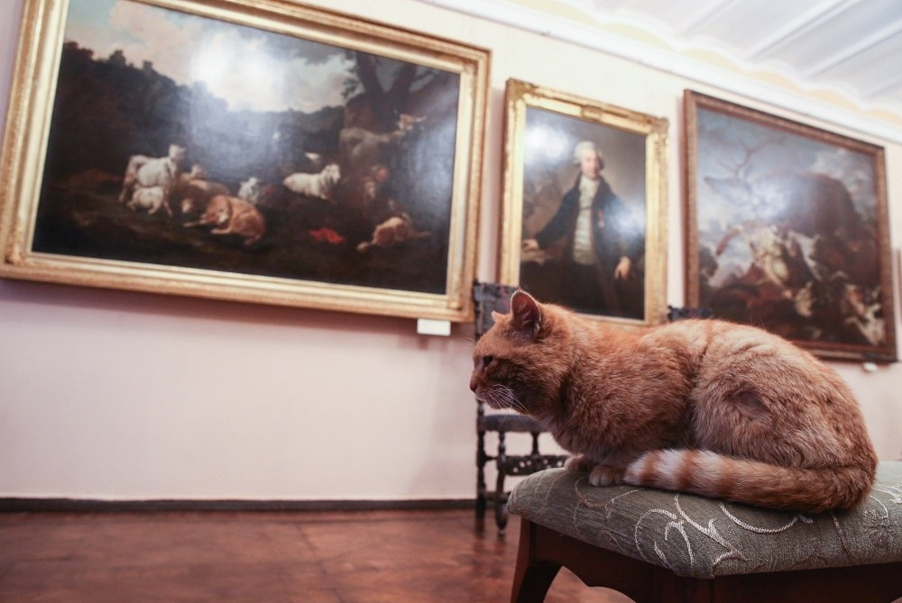 This Museum's Prank Went Wrong And Now They've Employed A Cat