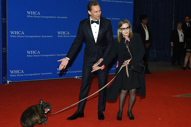 Carrie Fisher S Dog Gary Won The Red Carpet At The White
