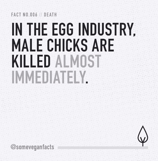 Fact 006.