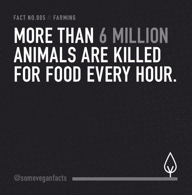 Fact 005.