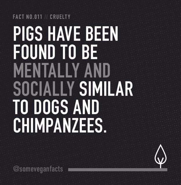 Fact 011.