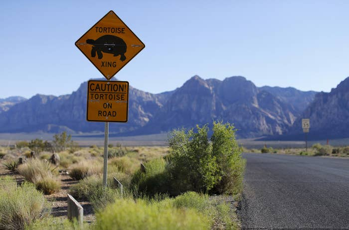 Signs warning drivers of possible tortoise crossing near Red Rock Canyon National Park on the west side of Las Vegas, Nevada May 2, 2014.