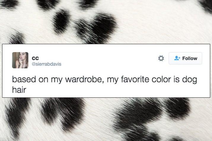 """""""Com base no meu guarda-roupa, minha cor favorita é pelo de cachorro."""""""