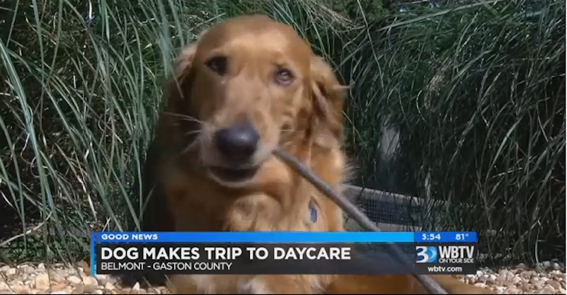 A Dog Ran Away From Home To Go To His Doggie Daycare
