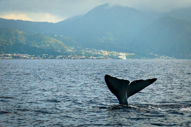 2. Dominica: The Protector of the Whales