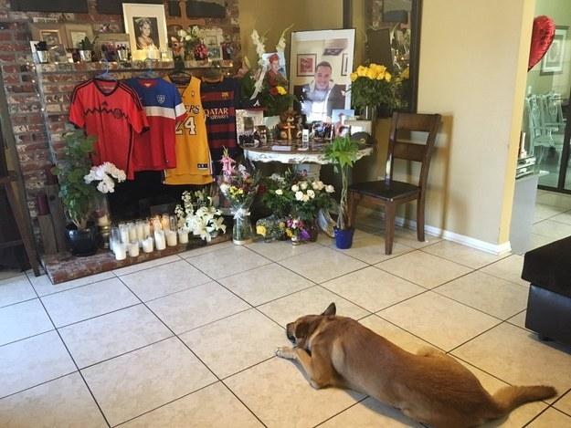 Dog mourns death of owner