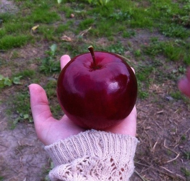 THIS APPLE.