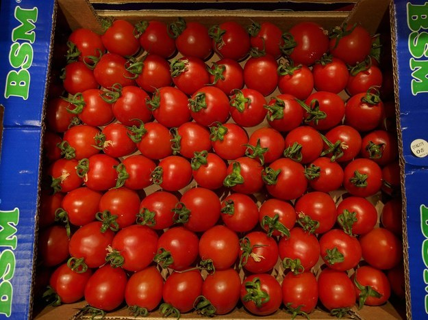 Estos tomates.