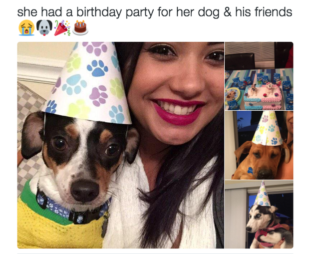 When you celebrate your dog's birthday: