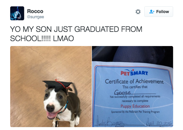When you're proud of your dog and everything they accomplish: