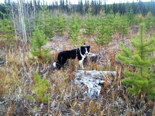 Reid e Pacer saíram para correr no parque Forests for the World. Eles só tinham percorrido 50 metros do estacionamento quando uma ursa negra saiu dos arbustos e entrou no caminho deles.