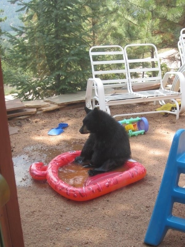 This bear chilling in a baby pool: