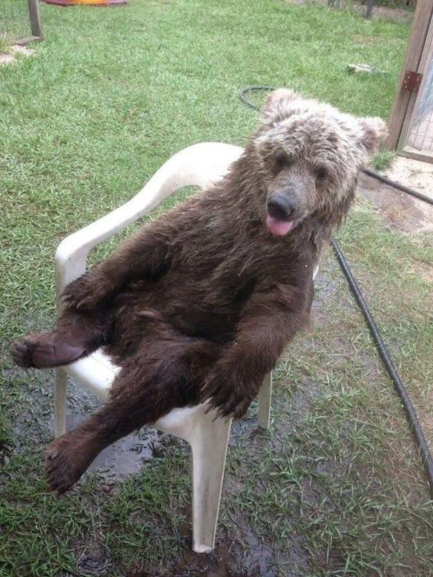 This bear enjoying the weekend: