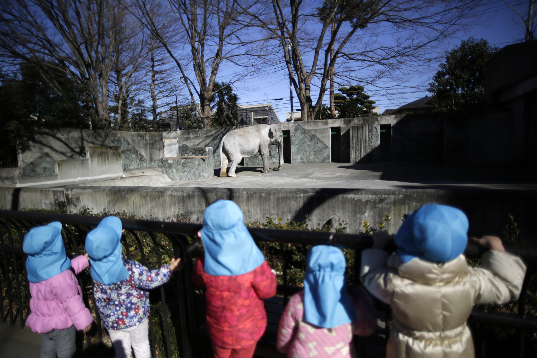 Japan's Oldest Elephant Has Died After A Lifetime Of Captivity