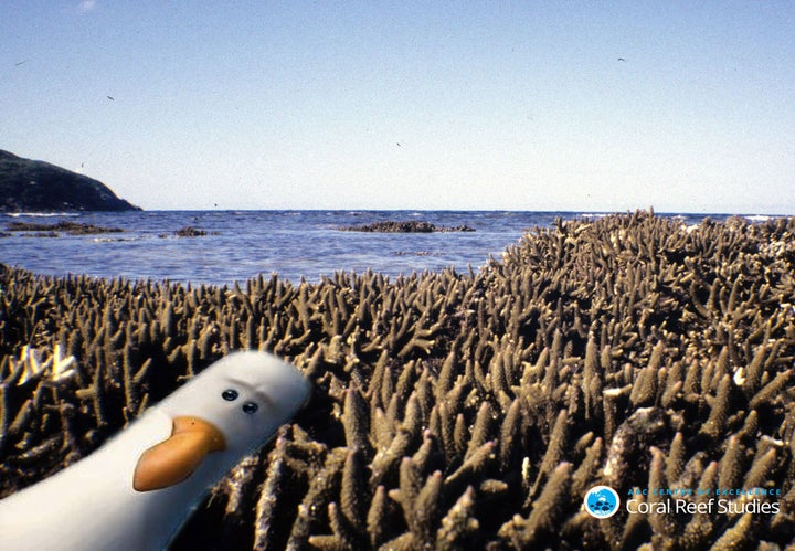 """This Is What It Would Look Like If They Made """"Finding Nemo"""" Today"""