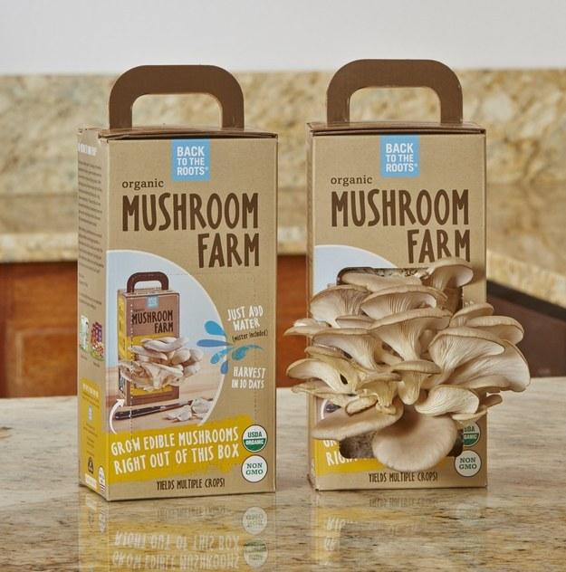 Un kit para convertir tu cocina en una pequeña granja de setas.
