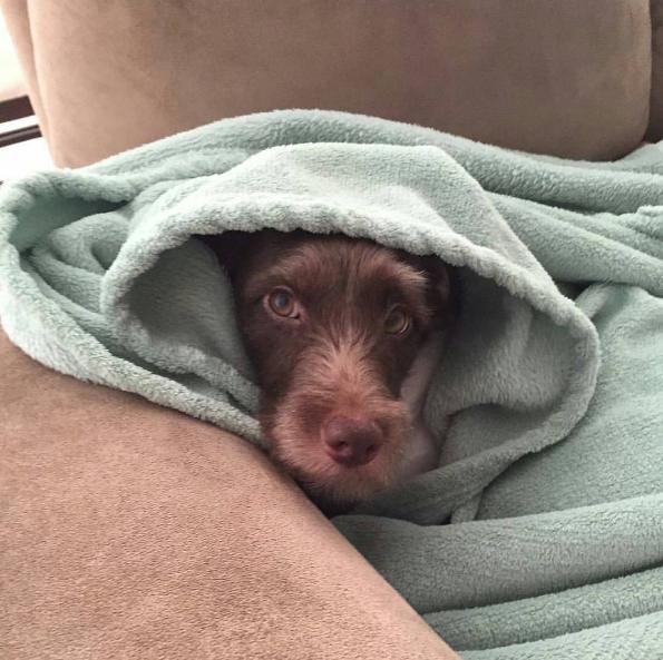 Olhar para a carinha dele quando ele se esconde em um lugar quentinho.