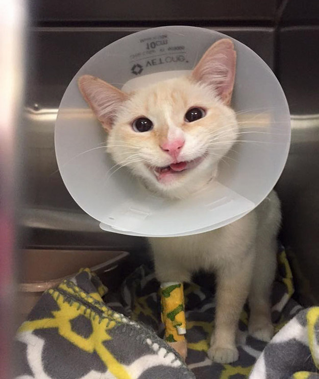 Duchess made it through the operation, and the months of recovery afterwards. Soon, she became known for her unique, charming smile, thanks to her crooked jaw.