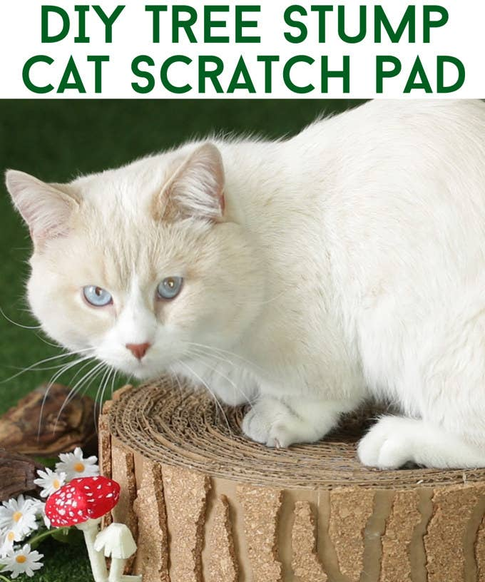 Stop Everything And Make This Tree Stump Cat Scratch Pad