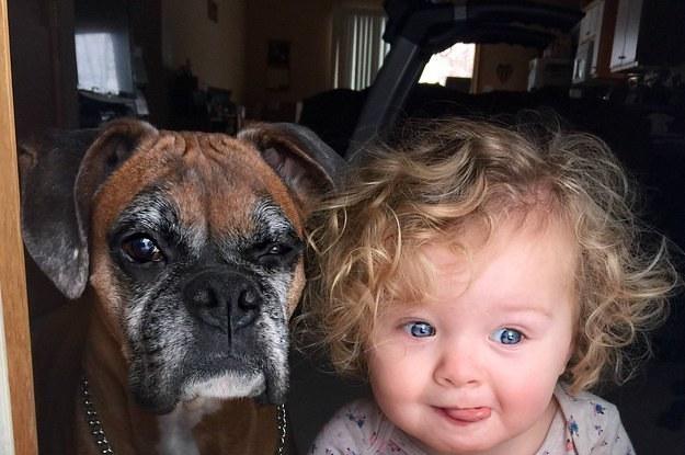 16 Beweise, dass alte Hunde immer die Besten sein werden