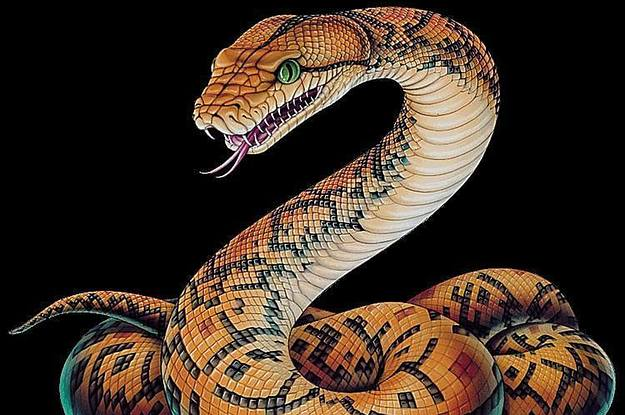 The Hardest Snake Quiz You Will Ever Take