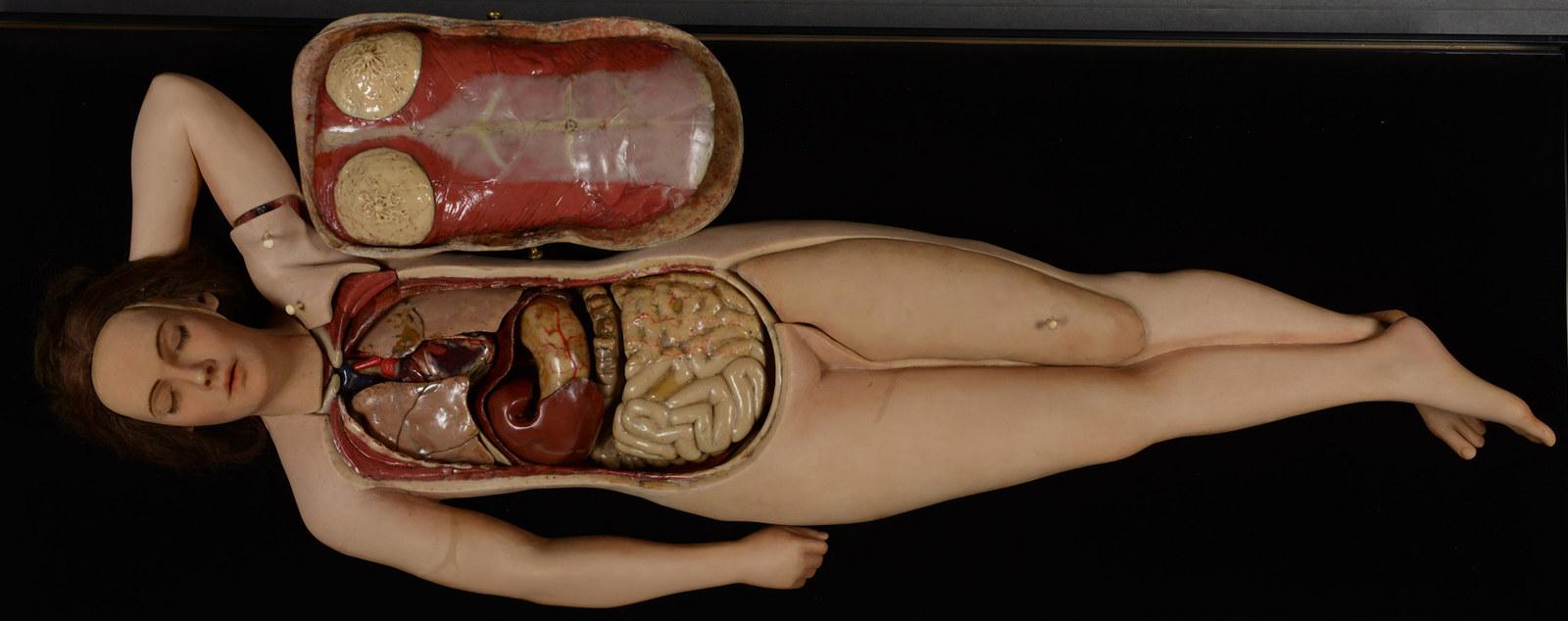 Съемка вагины из нутри, Видео из вагины женский оргазм 19 фотография