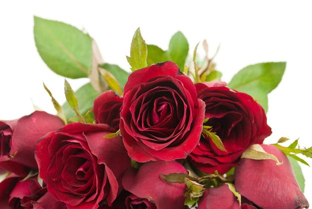 Regalar un docena de rosas.