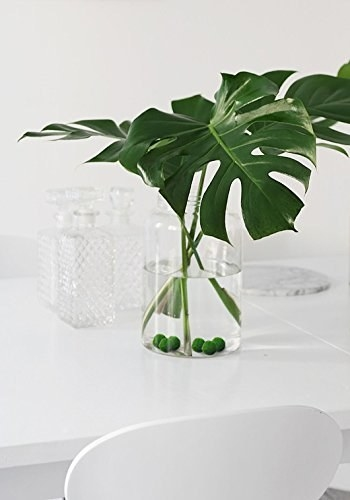 A pack of adorable and low-maintenance Marimo moss balls that can live in vases, fish tanks, or with other plants to add a little playful flare to your indoor home garden.