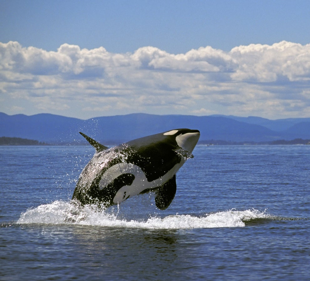 Whale-watching, British Columbia