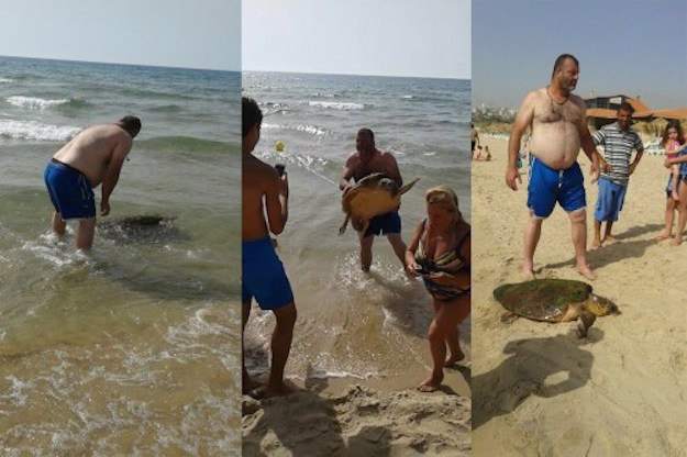 People Pulled This Sea Turtle From The Ocean To Take Pictures With It