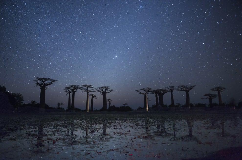 Los Baobabs de Madagascar.