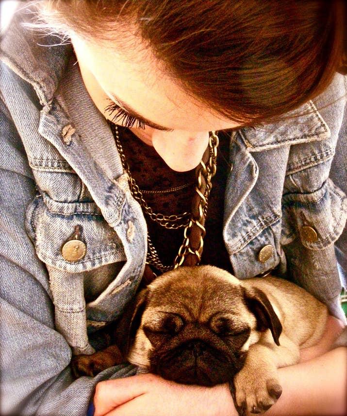 Resultado de imagen para pug dog, sleep in your arms