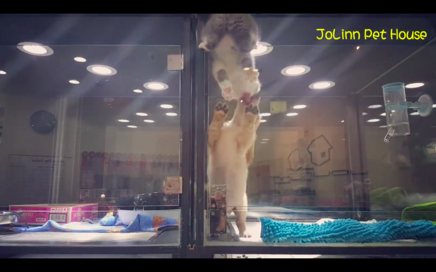 This Kitten Escaping Its Cage To See Its Puppy Friend Will Warm Your Heart