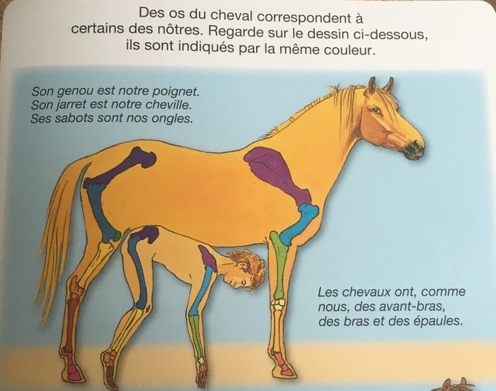 image cheval wtf