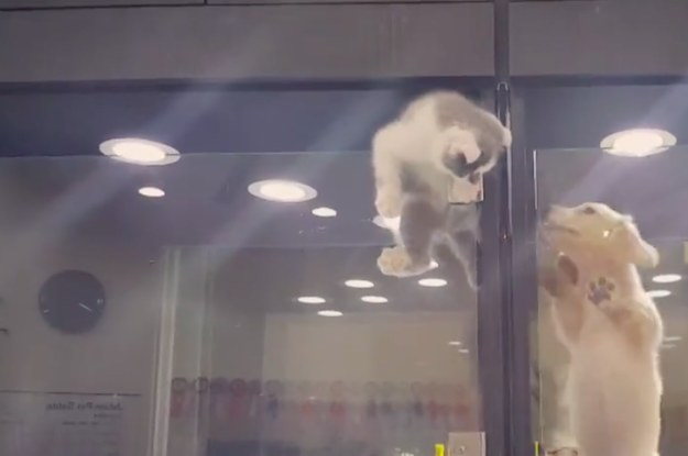 This Kitten Escaping Its Cage To See Its Puppy Friend Will Warm - Kitten escapes pet store display to join lonely puppy