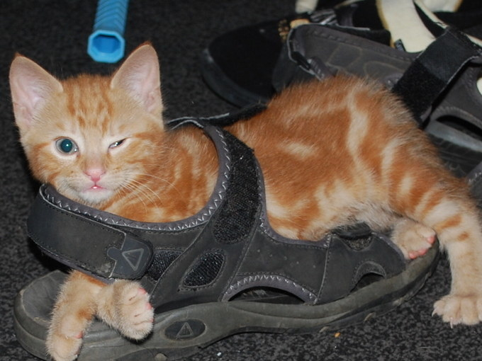 21 Of The Most Awkward Kittens In The World