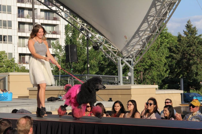 "Hundreds of dog model contestants entered to become one of twenty Omaha Top Models that strutted the ""dog walk"" on Saturday. 7 Designers, including nationally known award winners, competed to take the top designer prize."