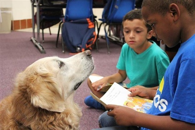 Up until recently, Bretagne had been spending her old age working at a local elementary school as a dog that children can read aloud to so they can practice their reading skills.
