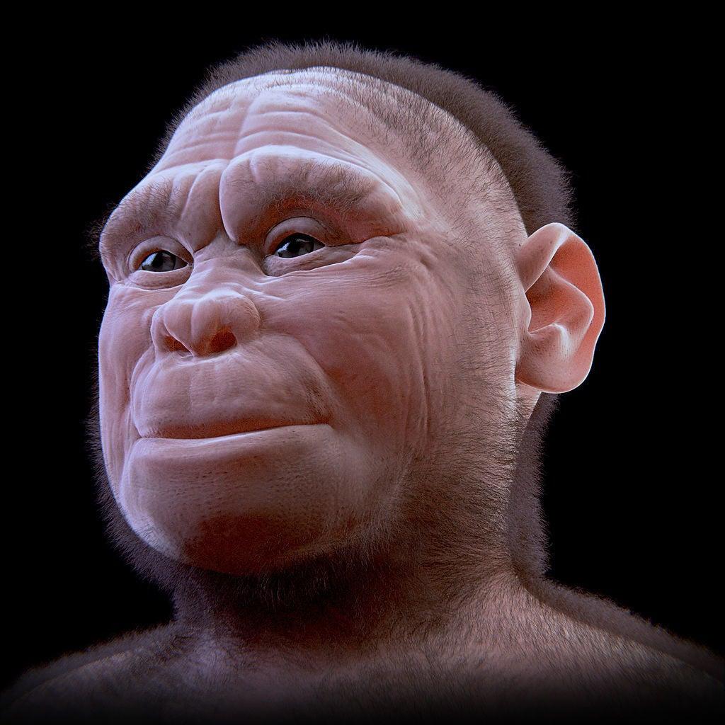 Facial reconstruction of a Homo floresiensis individual called LB1.