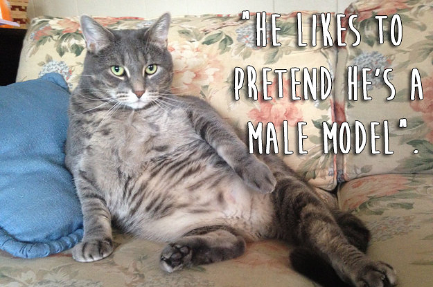 23 Really Weird Things Cats Actually Do